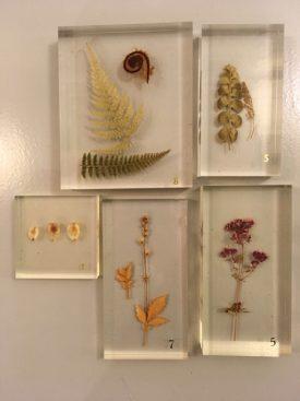 Czech botanical samples