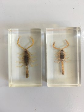 Insect Samples