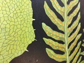 Fern Botanical Wall Chart