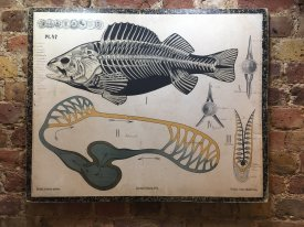 Zoological Wall Charts