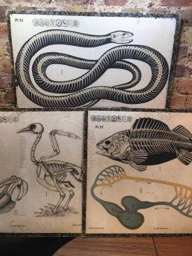 Zoological Wall Charts